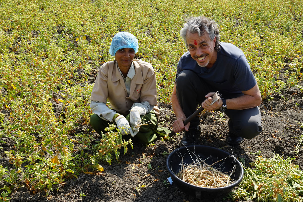 chris-kilham-with-Ashwagandha-roots-and-worker