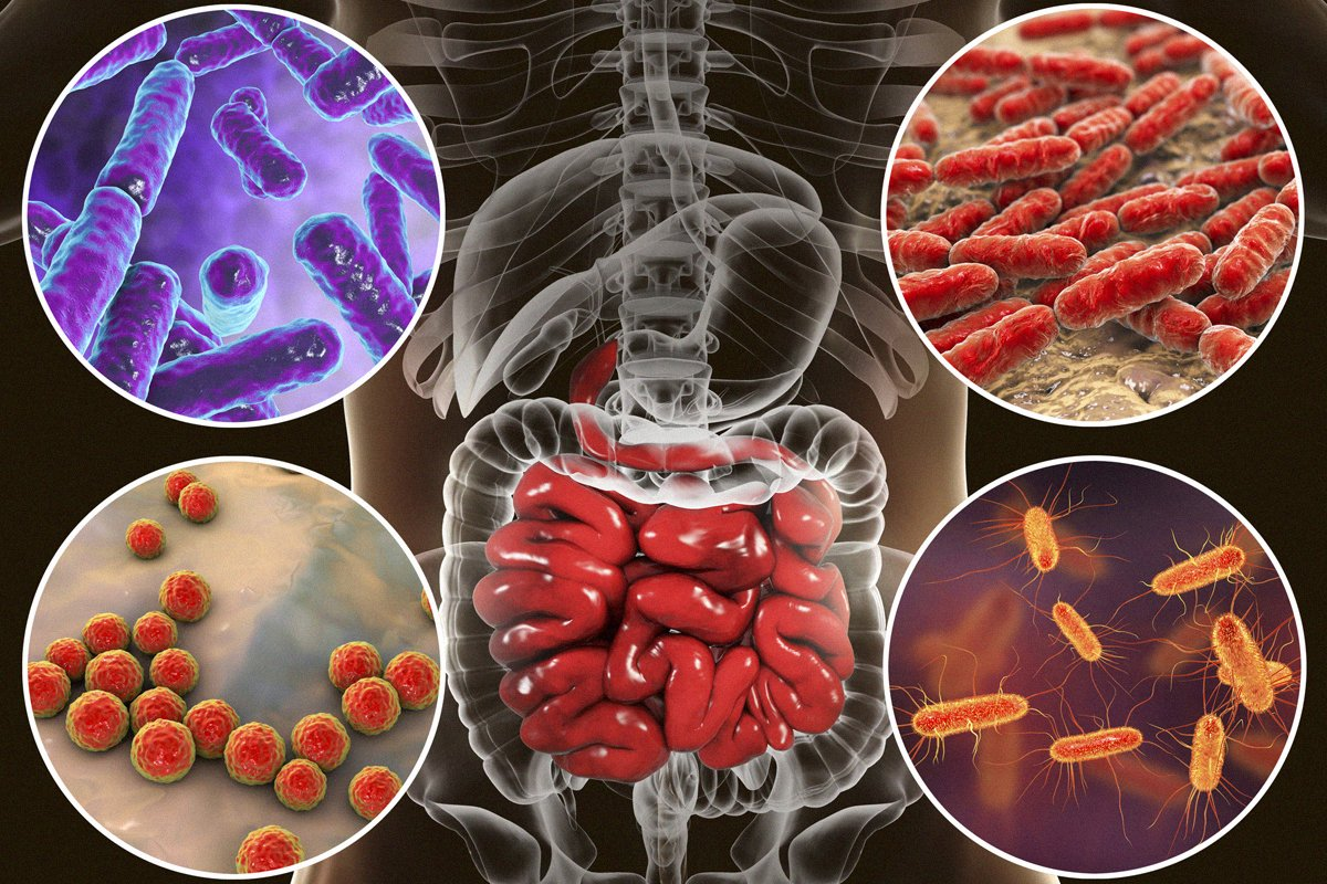 different-bacteria-and-microbioems-in-the-gut